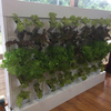 Hydroponic vertical wall outdoor system