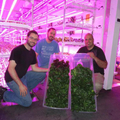 Our Hydroponic Indoor Farming In Canada